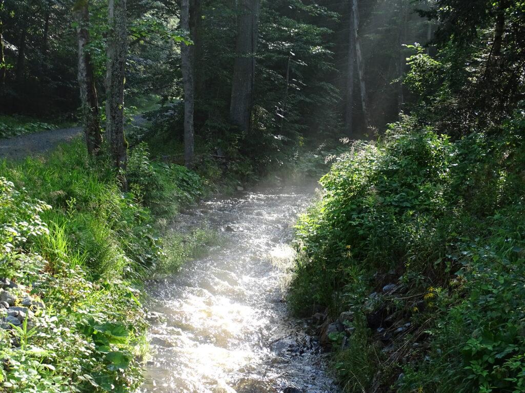 Bachlauf-Abendsonne-Dreiländereck-Bayerischer-Wald